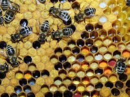 20131120-bijen