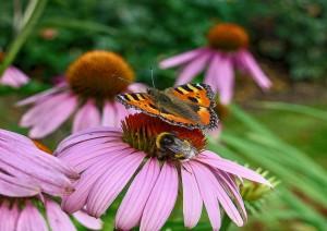 20160428-bijenvlindertuin